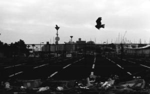 T001_黒い旋回